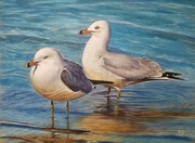 Seagulls Wading on the Shore by Rita Ginsberg